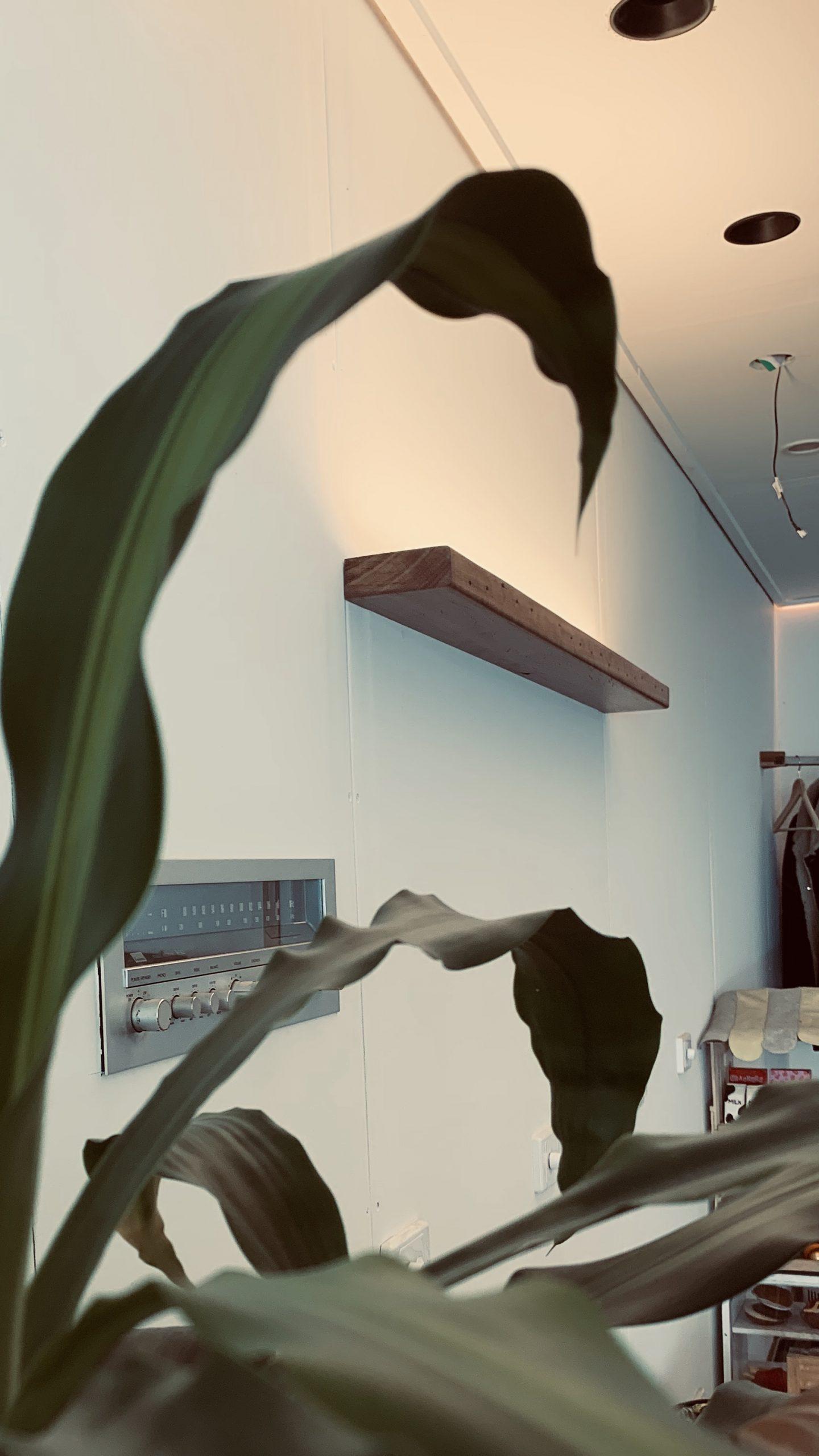 Solstice – Wallis -Natural Timber
